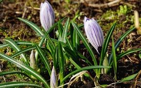 Картинка весна, зелень, цветы