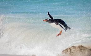 Обои океан, птица, волна, пингвин, сёрфинг, папуанский пингвин