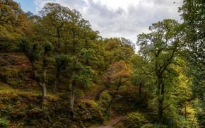 Картинка облака, деревья, Англия, тропа, холм, лестница, Dockray