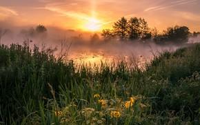Картинка небо, трава, солнце, облака, деревья, пейзаж, цветы, природа, туман, озеро, пруд, рассвет, заросли, берег, утро, …