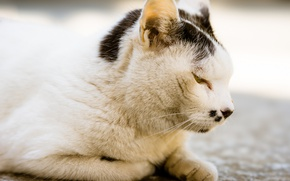 Картинка кошка, отдых, профиль