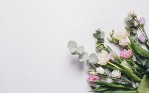 Картинка любовь, цветы, тюльпаны, розовые, white, белые, fresh, pink, flowers, beautiful, romantic, tulips, spring, эустома, tender