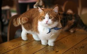 Обои кот, бантик, милый, рыжий, котенок, котёнок, стол, кошка