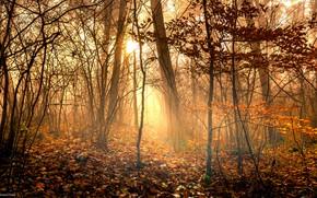 Картинка лес, листья, солнце, свет, деревья, ветки