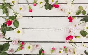 Картинка Цветы, Фон, Хризантемы, Гвоздики