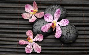 Картинка капли, цветы, камни, орхидеи