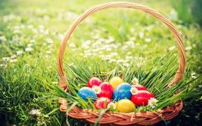 Обои трава, цветы, корзина, Пасха, flowers, spring, Easter, eggs, decoration, basket, Happy, яйца крашеные
