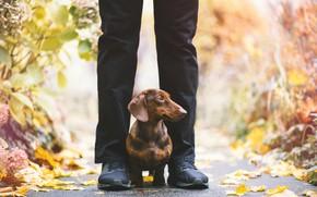 Картинка друг, человек, собака