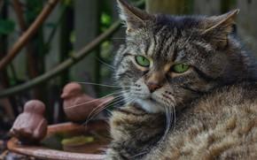 Картинка кот, взгляд, портрет
