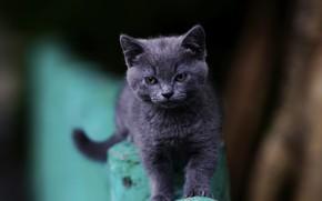 Картинка глаза, малыш, котейка
