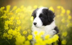 Картинка лето, собака, щенок
