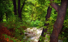 Картинка Поток, Лес, Nature, Речка, River, Forest