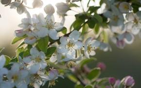 Картинка листья, макро, ветка, весна, цветки