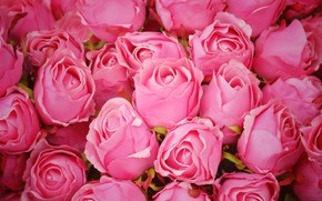 Картинка цветы, розы, розовые, бутоны, pink, flowers, romantic, roses, cute