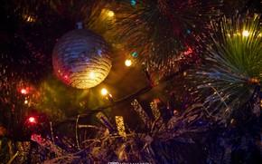 Картинка елка, новый год, гирлянда