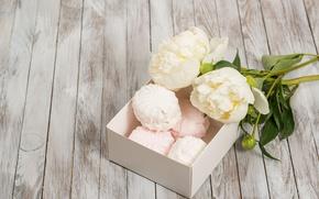 Картинка white, flowers, romantic, пионы, зефир, peonies, valentine`s day