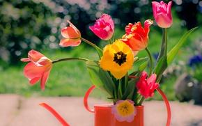 Картинка цветы, букет, тюльпаны, лейка