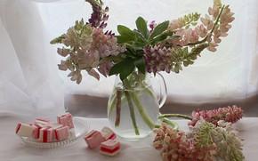 Картинка лето, натюрморт, цветы, люпины, растения