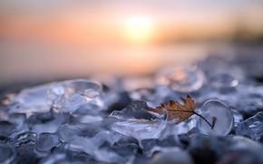 Обои природа, лист, лёд