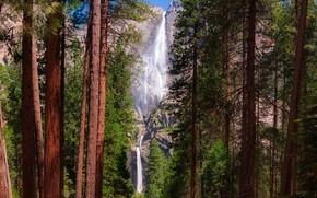 Картинка лес, солнце, деревья, камни, скалы, водопад, Калифорния, США, Йосемити, Yosemite National Park