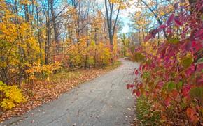 Обои листья, дорожка, осень, парк
