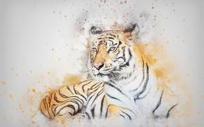 Обои кошка, взгляд, тигр, картина, акварель, лежит