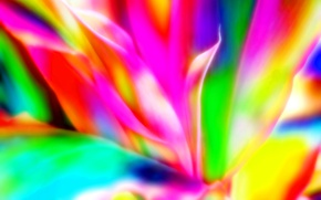 Обои линии, узор, фон, лепестки, фрактал, краски, пламя