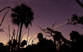 Картинка звезды, деревья, ночь, силуэт
