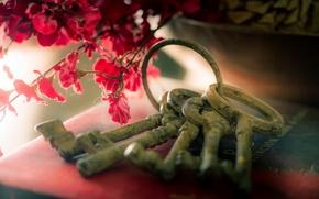 Картинка цветы, фон, ключи