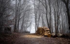 Картинка Осень, Лес, Тропа, Fall, Autumn, Forest, Path, Дрова
