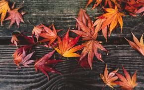 Картинка осень, листья, красные