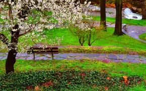 Картинка Природа, Трава, Весна, Скамейка, Парк, Nature, Grass, Речка, Park, Spring, Цветение, River, Flowering