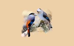 Картинка ветка, пара, птички