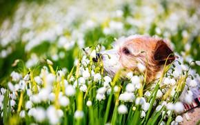 Картинка природа, собака, весна