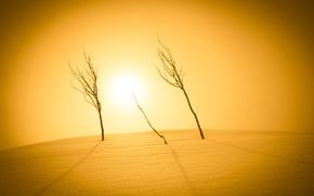 Картинка свет, снег, деревья