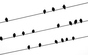 Картинка птицы, фон, провода