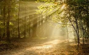 Обои лучи, свет, Utrecht, Утрехт, деревья, тропа, Netherlands, Нидерланды, осень, лес