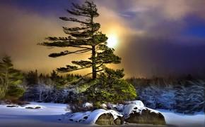 Обои зима, ночь, дерево