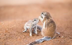 Картинка природа, фон, Southern African ground squirrels