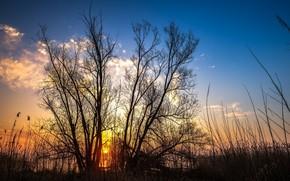 Картинка небо, утро, восход солнца