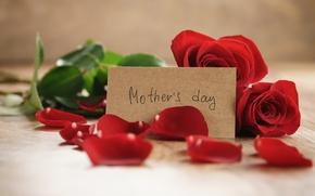Картинка букет, лепестки, red, romantic, gift, roses, красные розы, Mother's Day