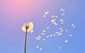 Картинка лето, небо, одуванчик