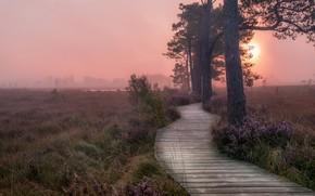 Картинка закат, туман, дорожка