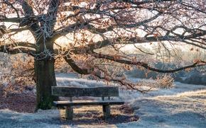 Обои зима, свет, парк, скамья