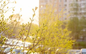 Картинка листья, весна, вечер, май, солнечно, жилые массивы, контровой свет, вечер в городе, весенний вечер, весна …