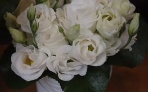Картинка розы, букет, ваза, белые, бутоны