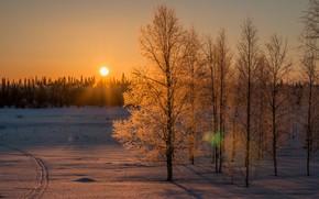 Картинка Солнце, Небо, Природа, Зима, Деревья, Снег, Лес, Ветки, Лучи