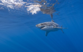 Картинка море, рыба, акула
