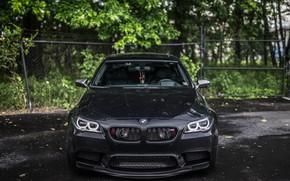 Картинка BMW, Front, Black, F10