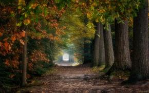 Картинка туннель, дорожка, осенний парк